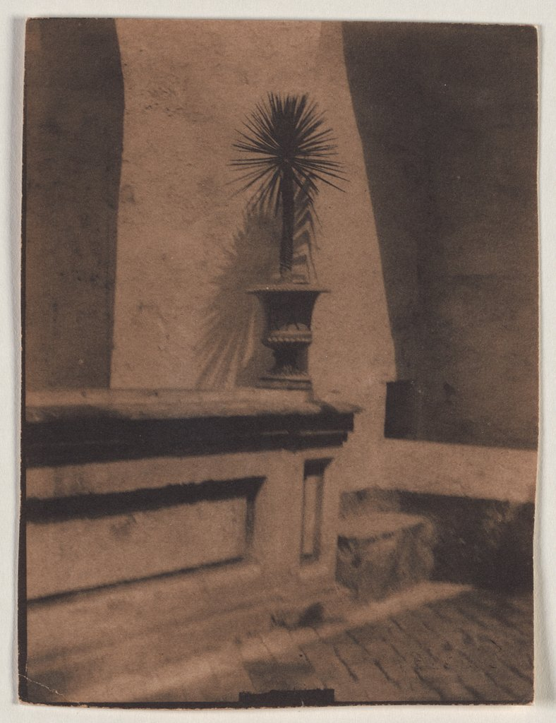 Pot With a Small Palm Tree in Front of a Wall, Adolphe de Meyer