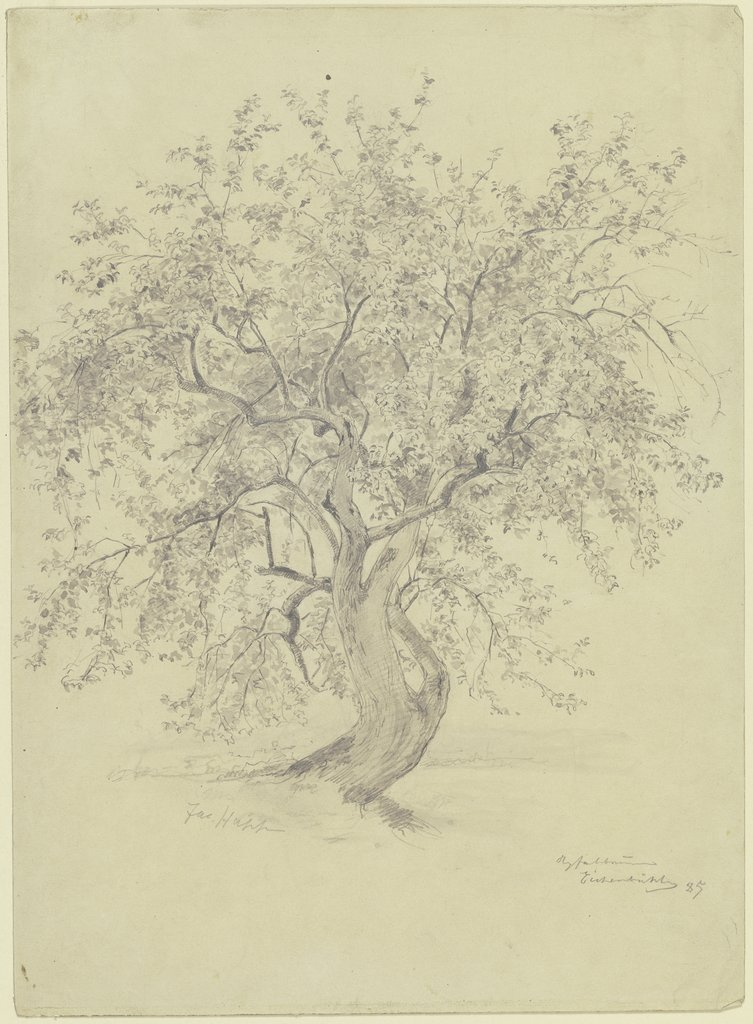 Apple tree at the Eichenbühl, Jacob Happ