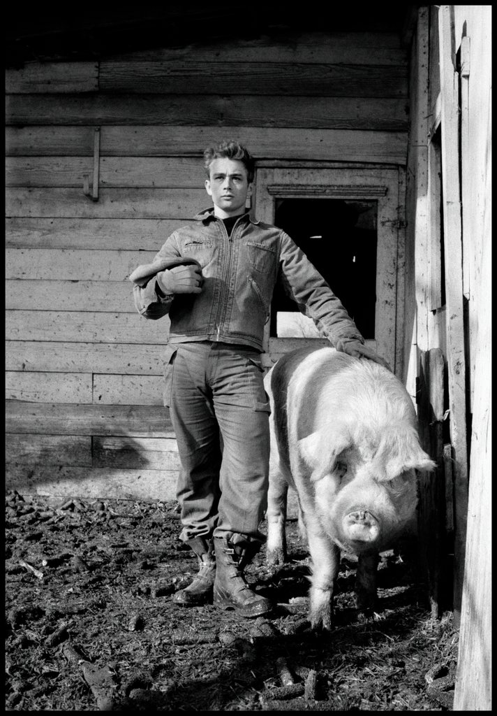 James Dean at Winslow Farm posing as an old Star Portrait with a Sow, Dennis Stock