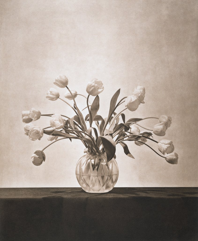 Untitled, from the series: Flowers, Robert Mapplethorpe