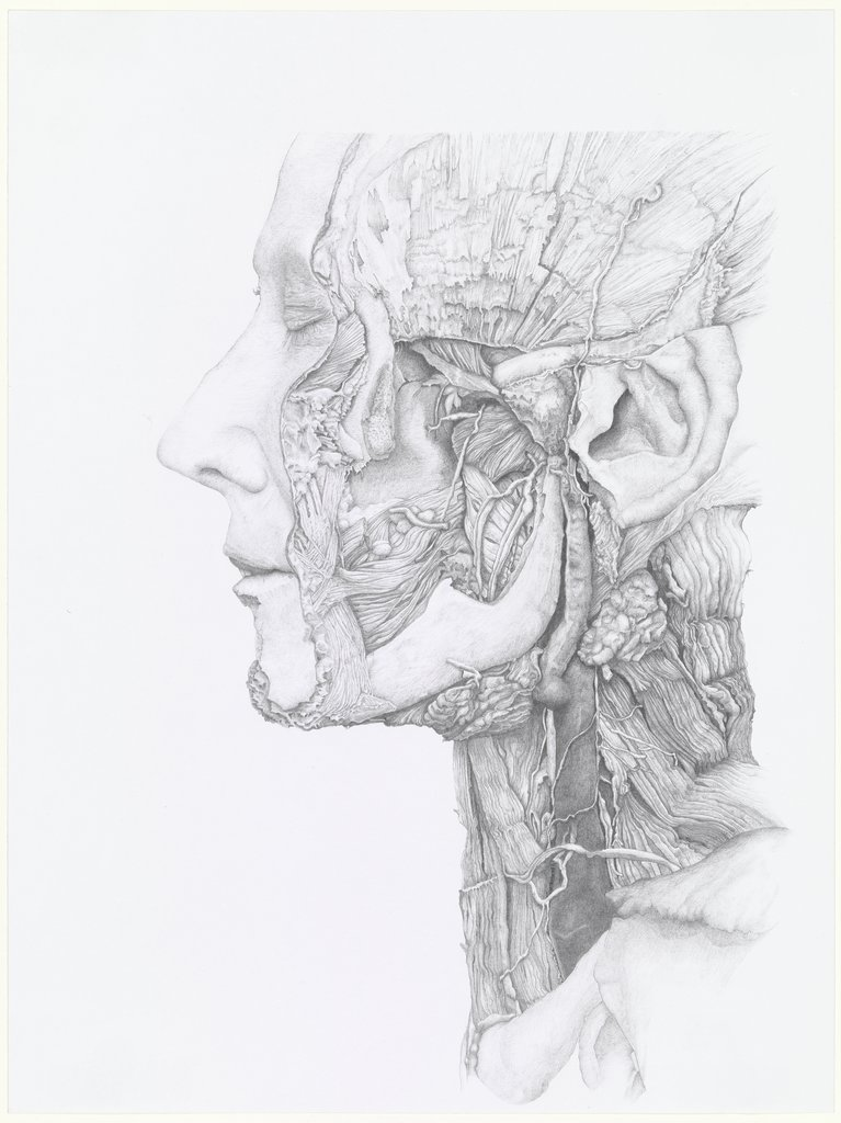 Face and Neck from the Side, Christoph Borowiak