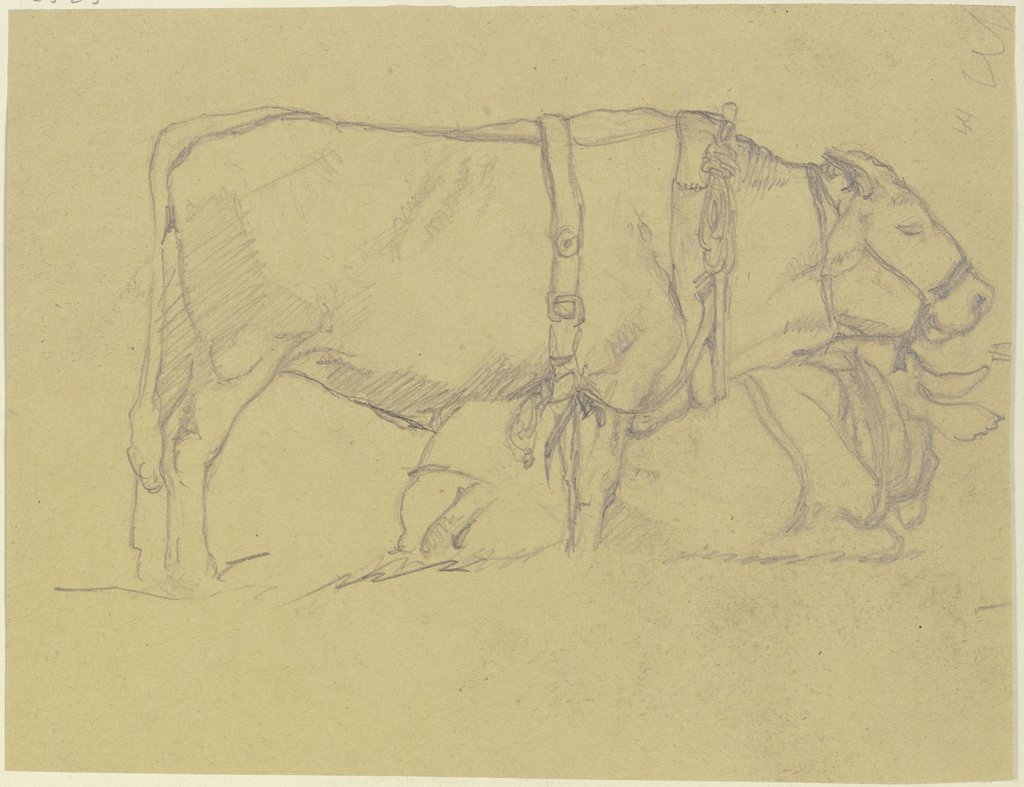 Harnessed ox, Georg Poppe
