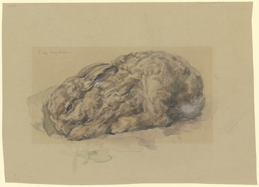 Young rabbit, Felix Klipstein