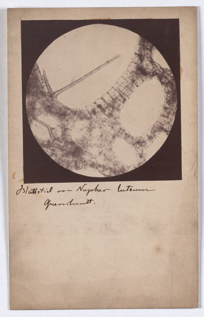 Micro Photography, Unknown, 19th century