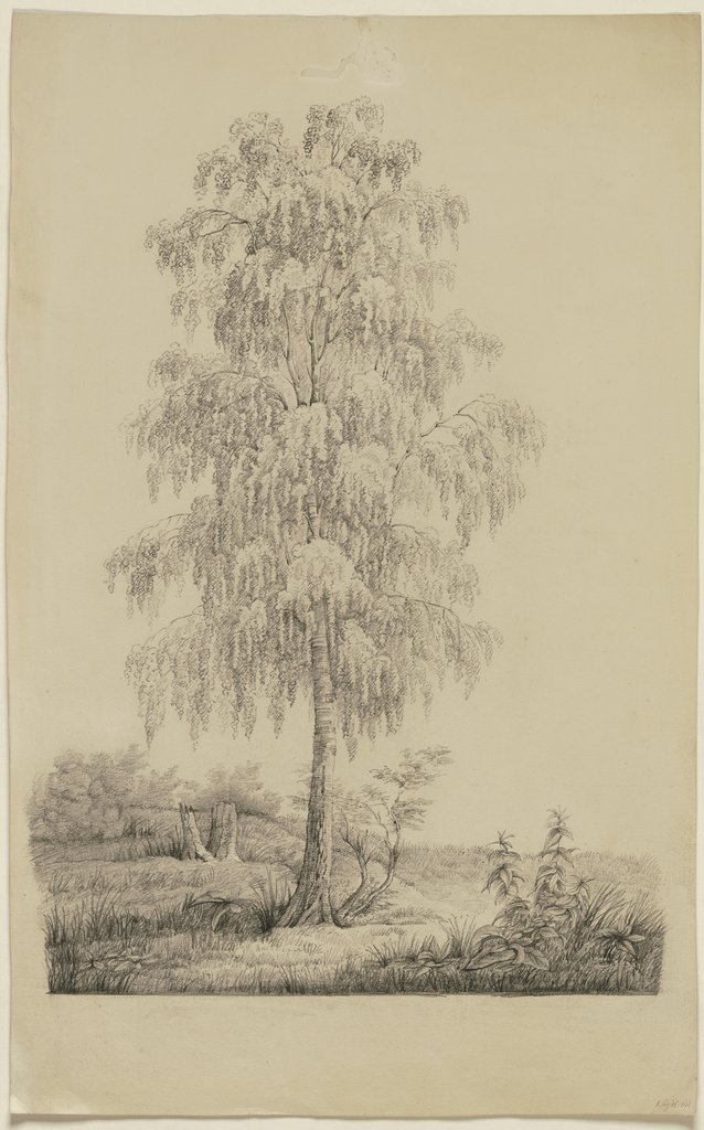 Study of a tree, Victor Müller