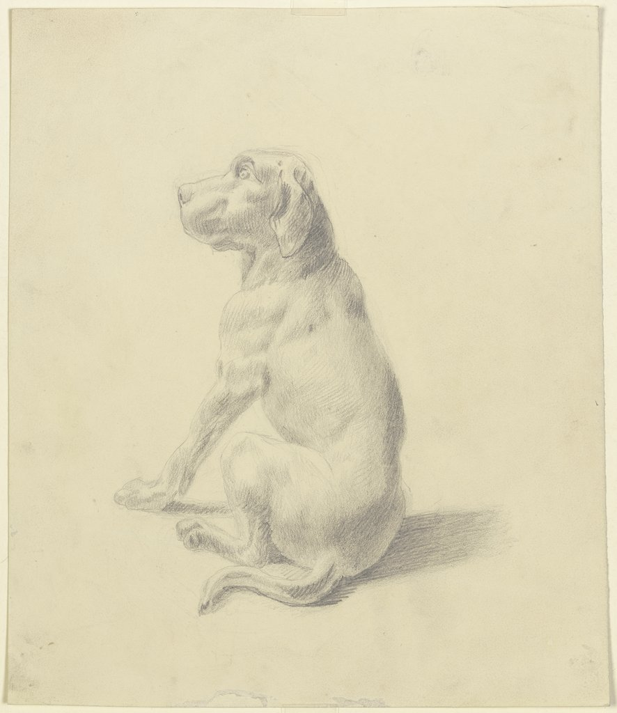 Sitting dog to the left, Victor Müller