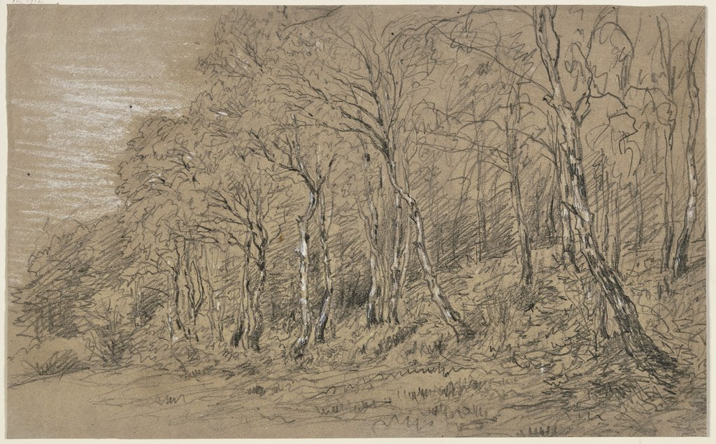 Birch trees at the edge of the forest, Jakob Maurer