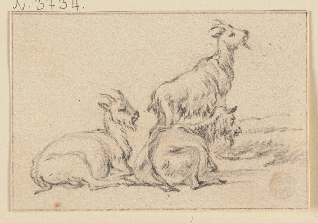 Three goats, Jacob Cats