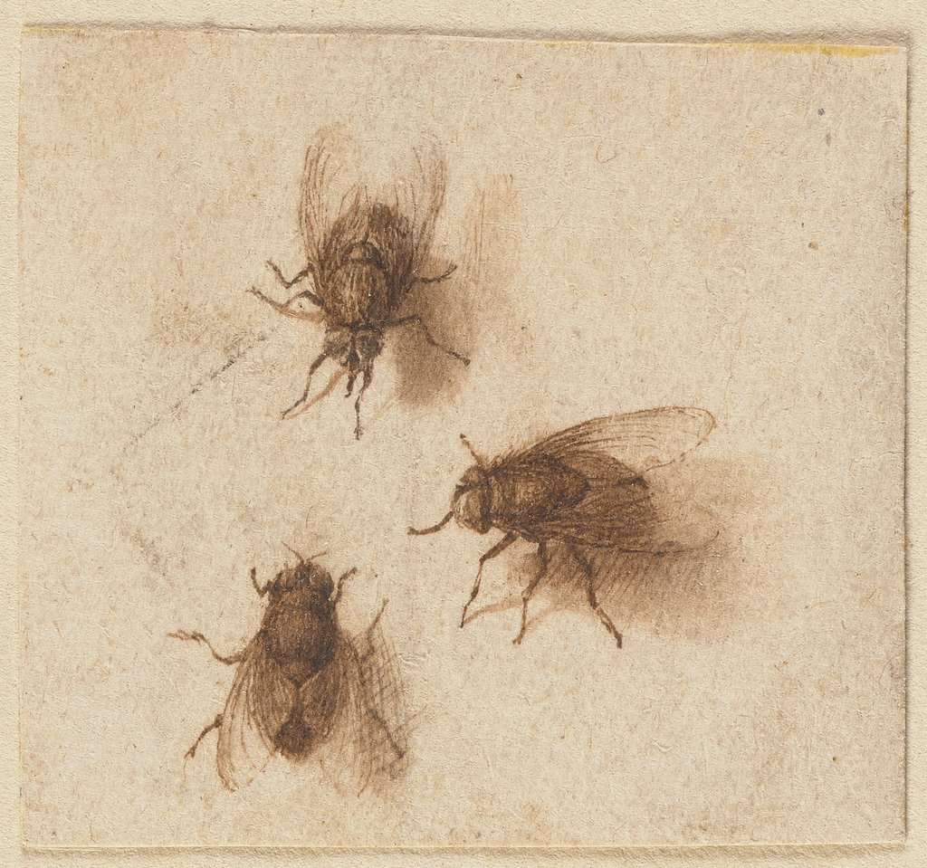 Three flies, Jacques de Gheyn II