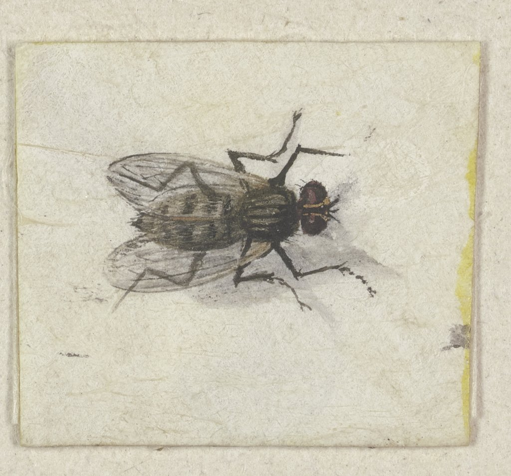 A small fly seen from above, Jacques de Gheyn II