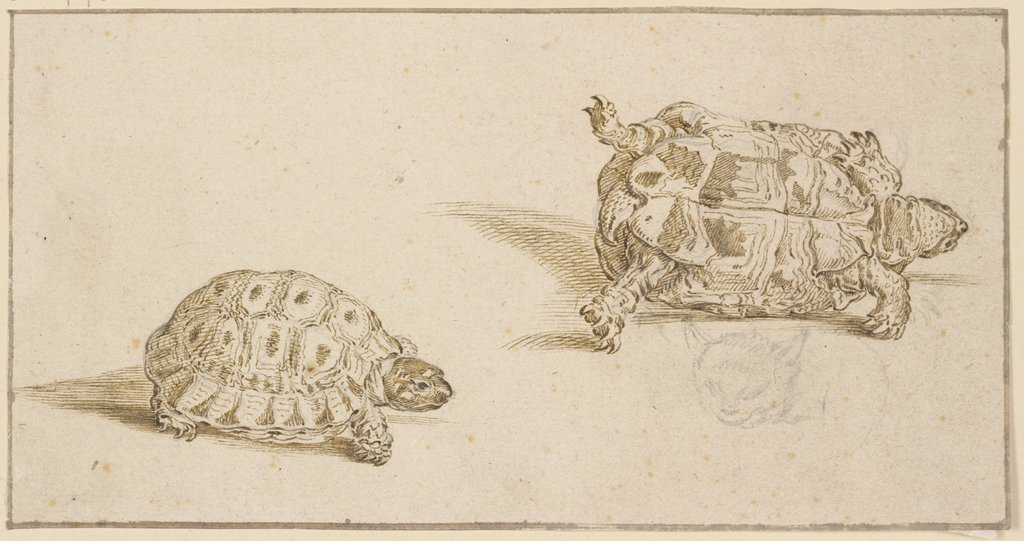 A tortoise seen from above and from below, and the head of a cat, Jacques de Gheyn II