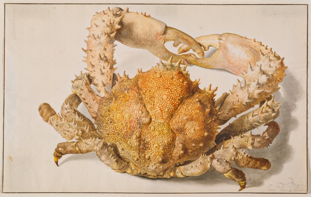 A Crab, Jan van Huysum