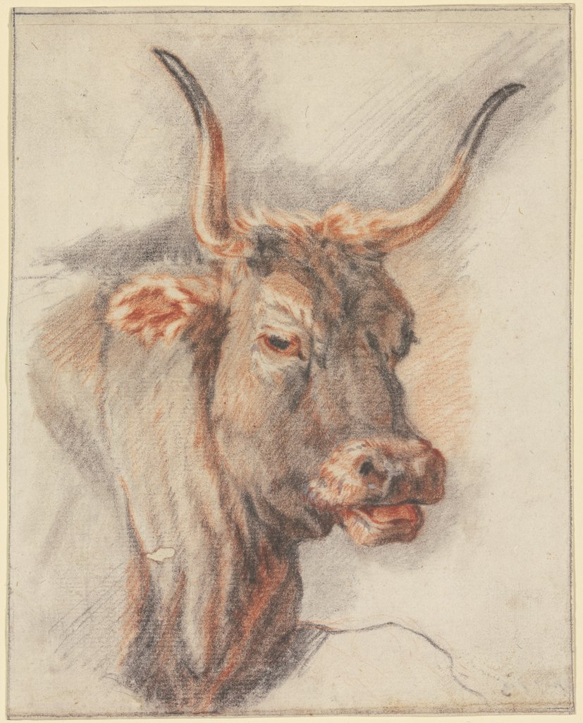 An ox head, Paulus Potter