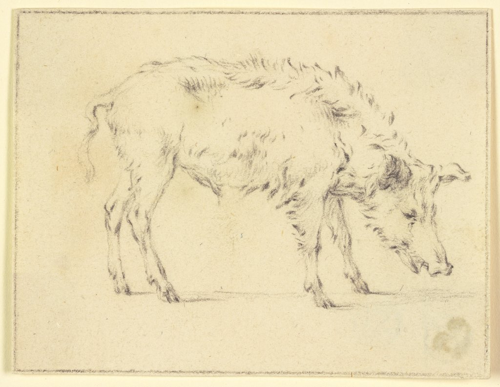 A pig to the right, Paulus Potter