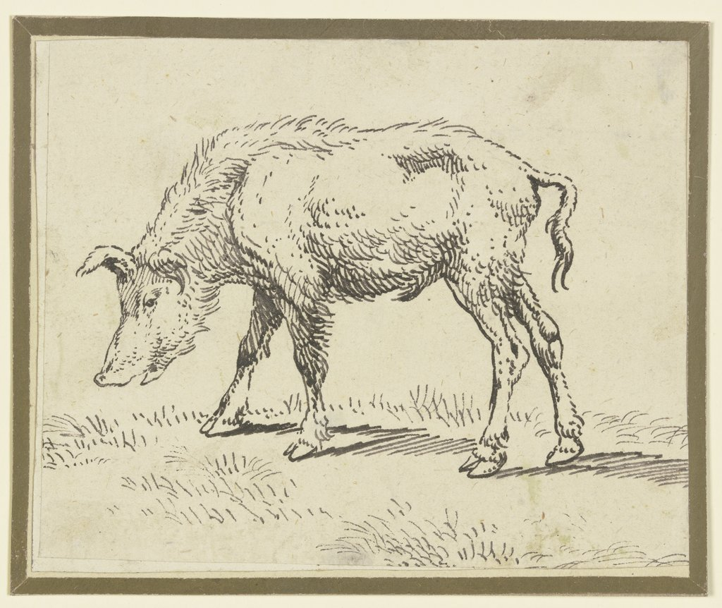 A pig to the left, Paulus Potter