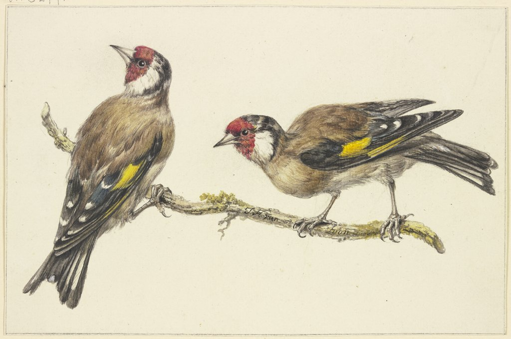Two goldfinches, J. H. van Loon