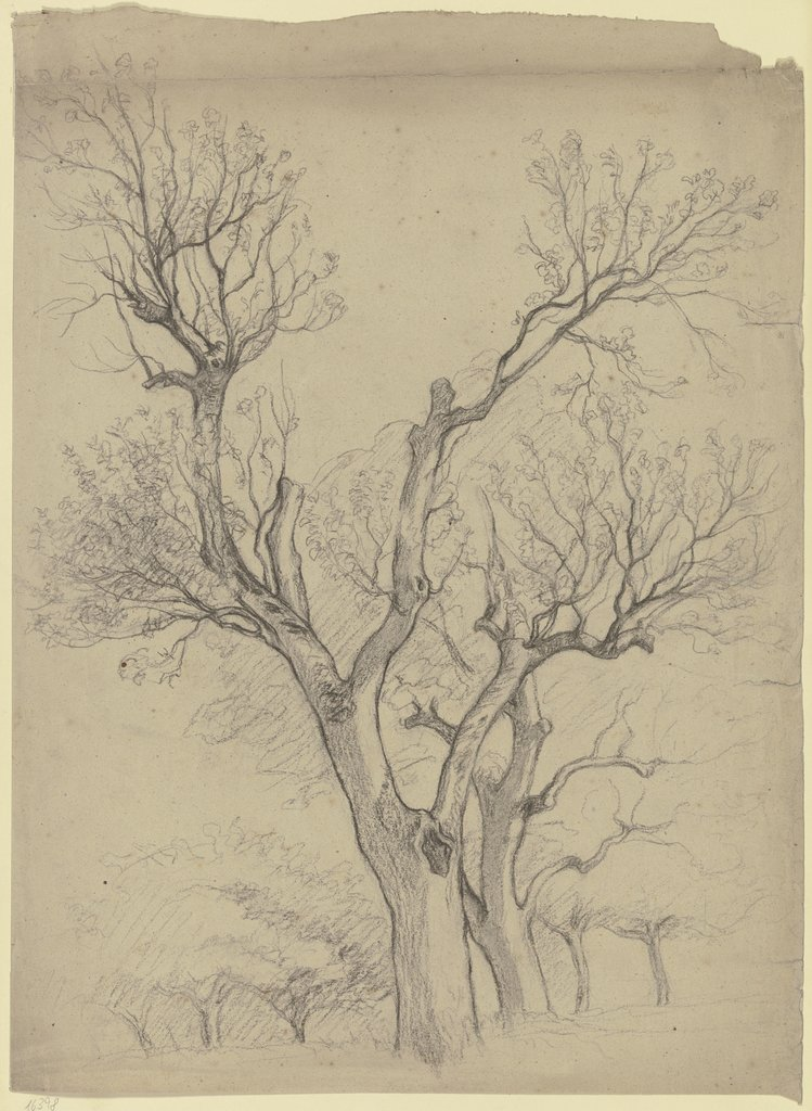 Leafless pair of trees, Otto Scholderer