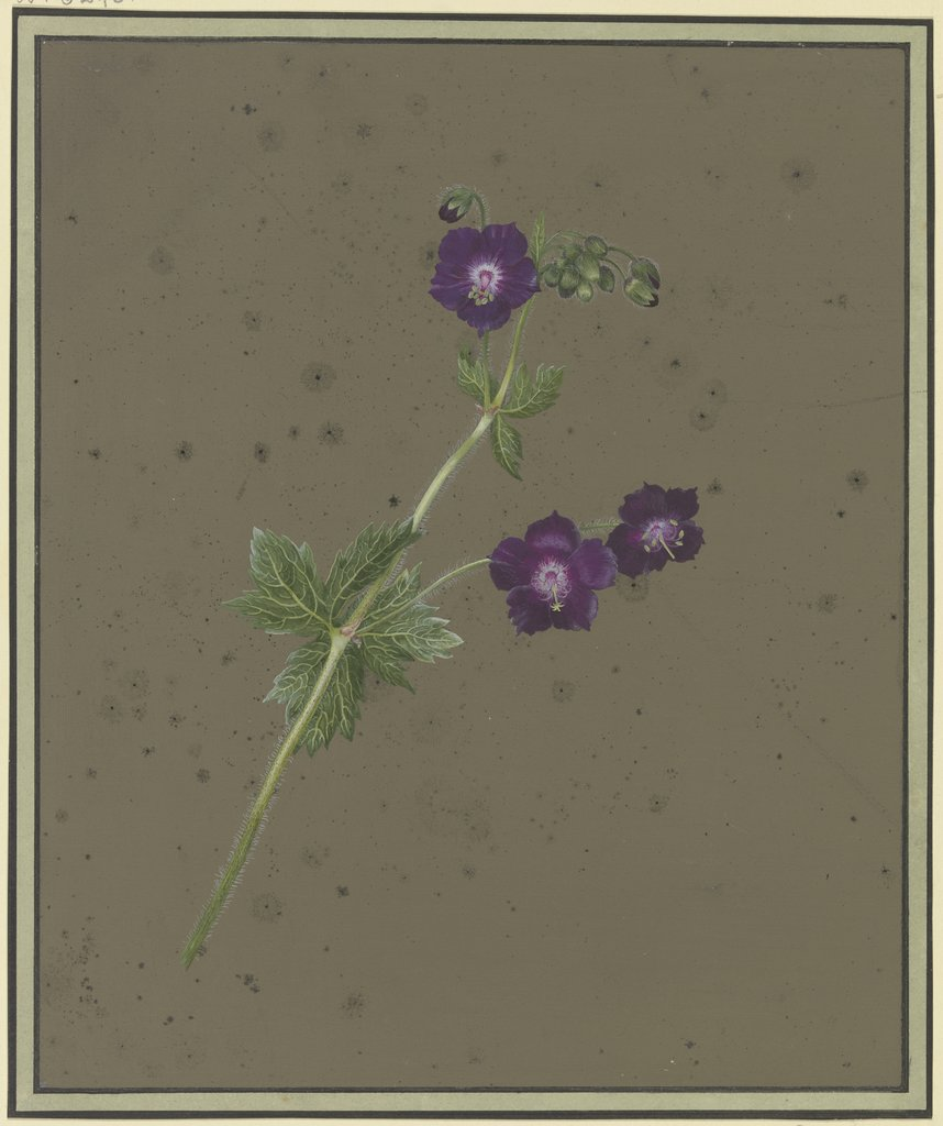 Branch with violet blossoms, Christiane Friederike Stricker
