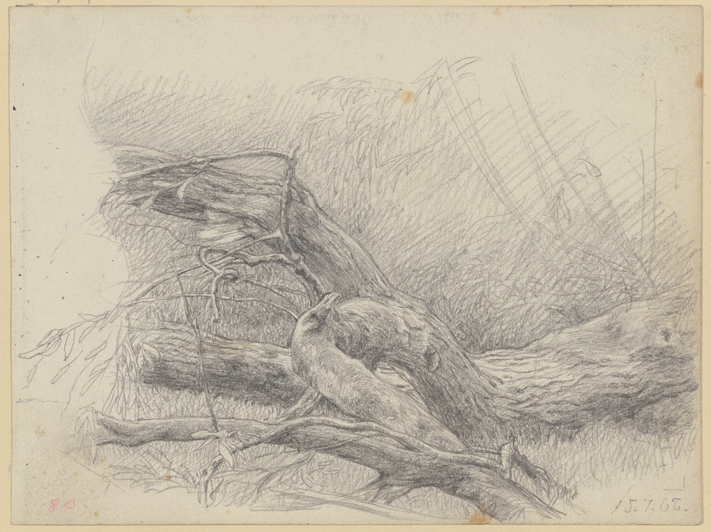 Fallen over tree trunk, Louis Eysen