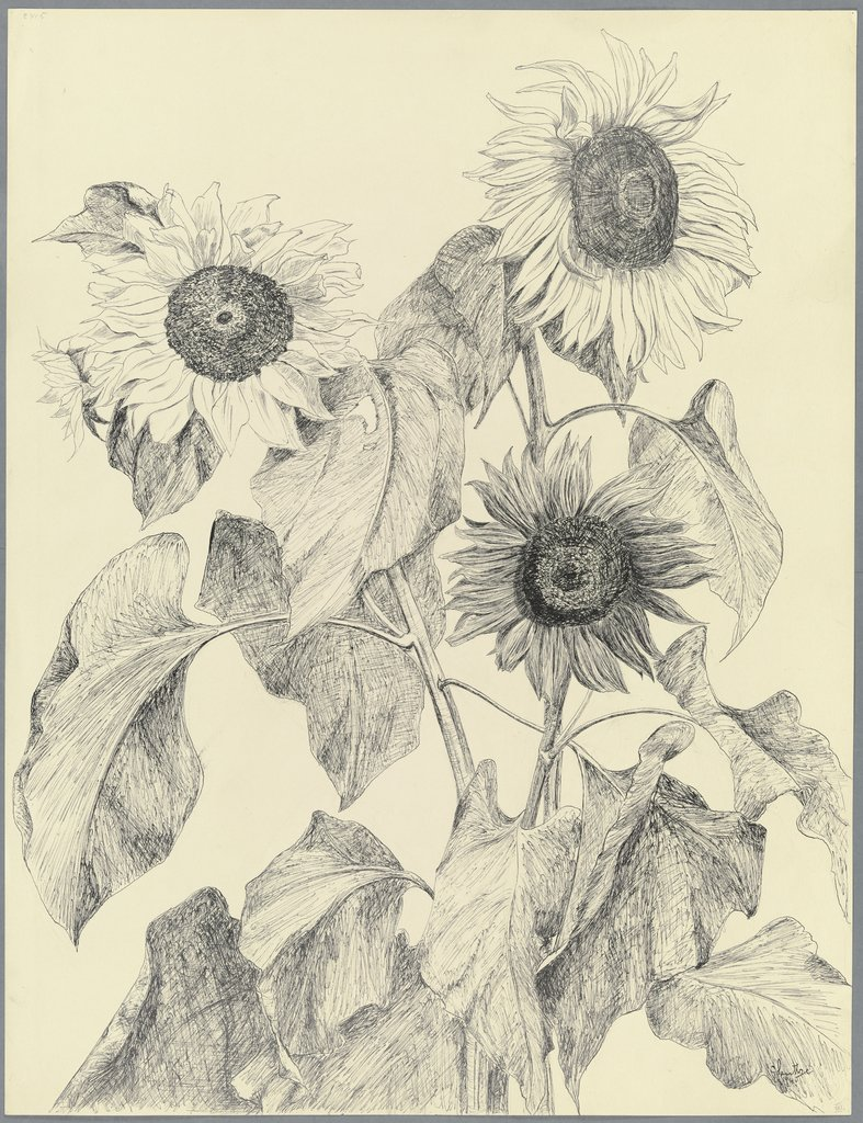 Sunflowers, Gertrud Sentke