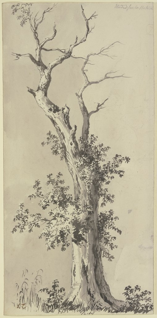 Tree with leafless treetop, Jean-Jacques de Boissieu