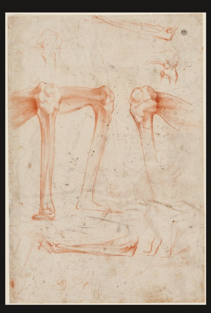 Studies of legs, knees and arms, Rosso Fiorentino