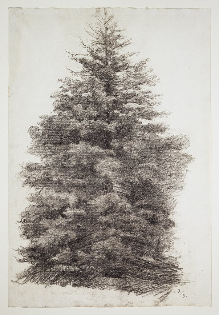 Fir tree, Louis Eysen