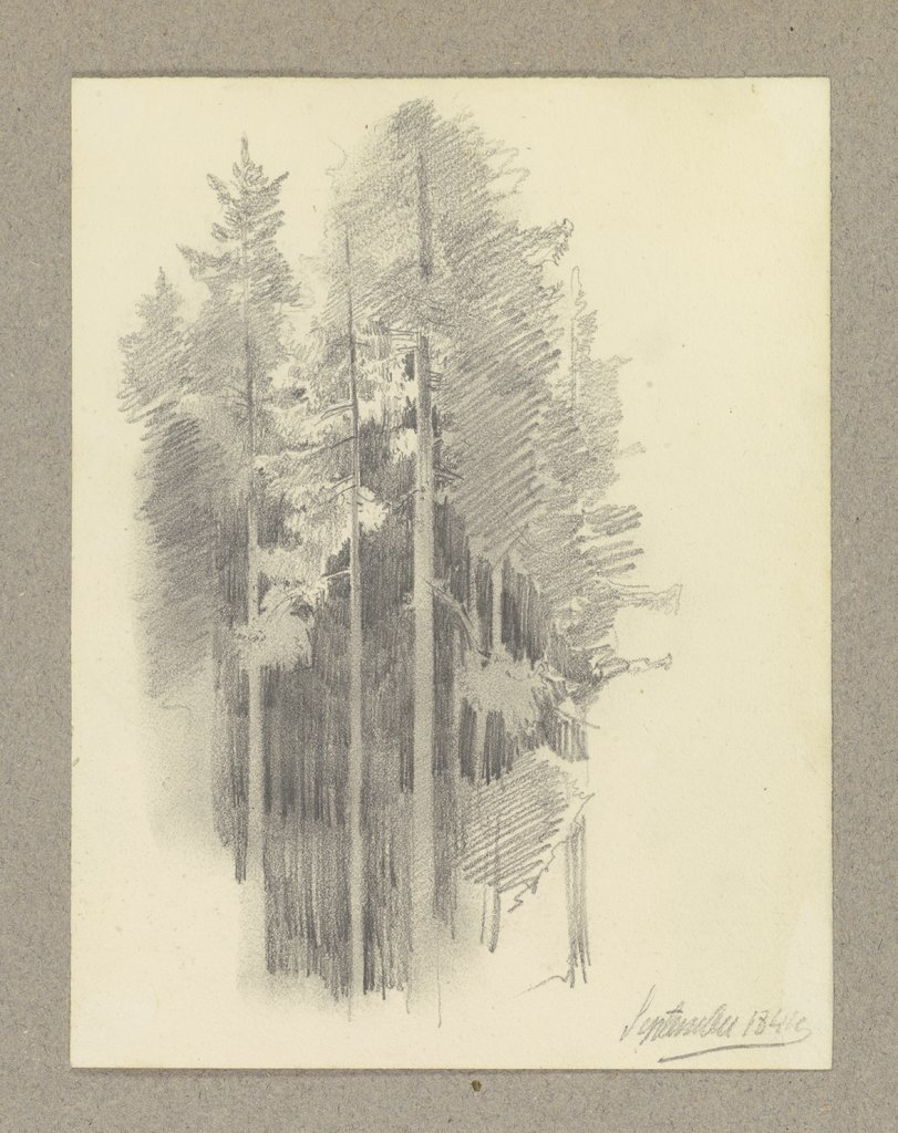Thick conifer forest, Carl Theodor Reiffenstein