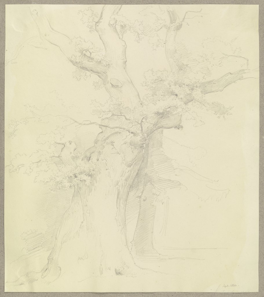 Old tree, Carl Theodor Reiffenstein