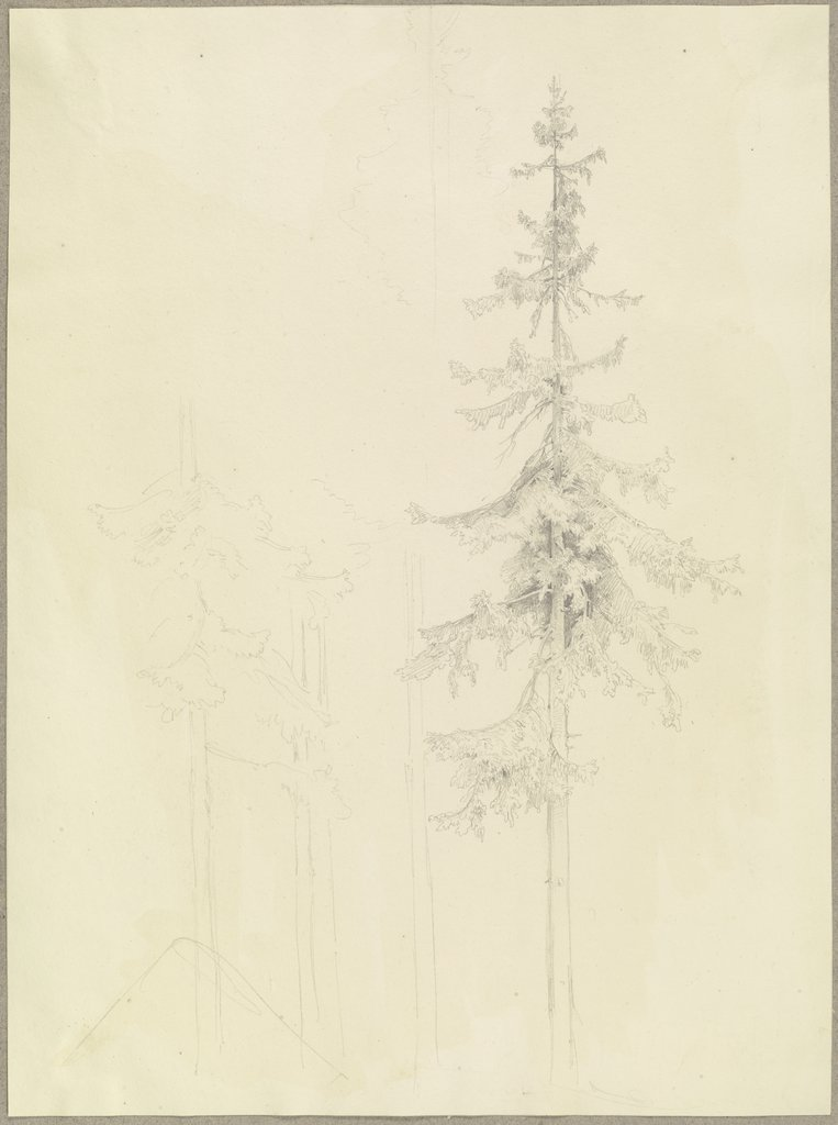 Conifers, Carl Theodor Reiffenstein
