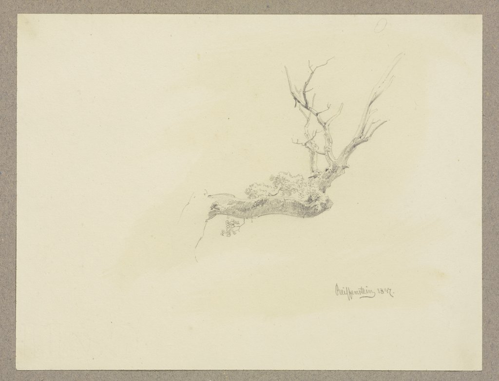 Bare tree branch, Carl Theodor Reiffenstein