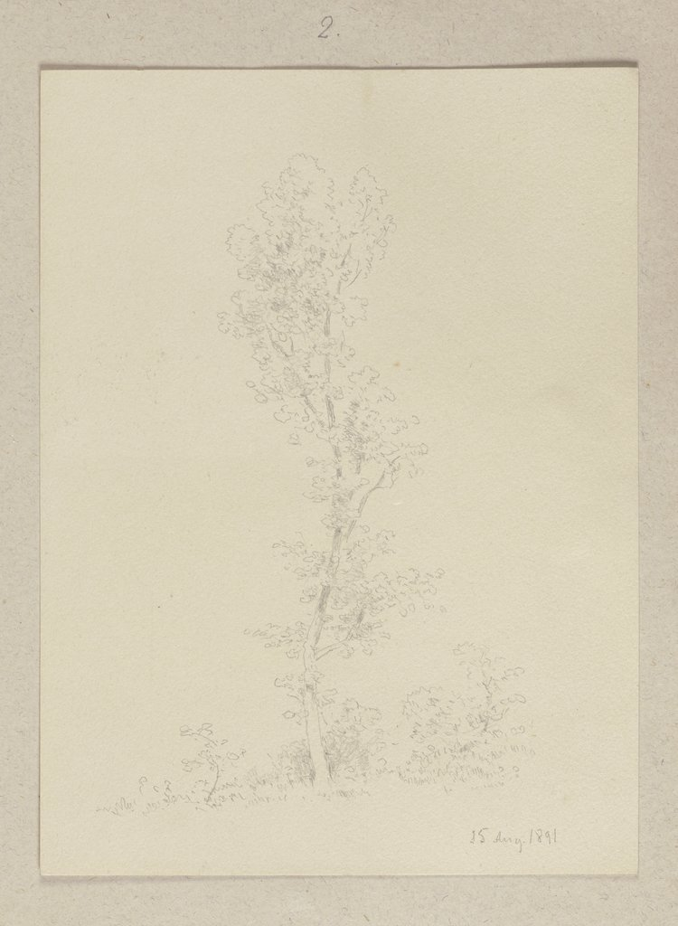 Young tree, Carl Theodor Reiffenstein