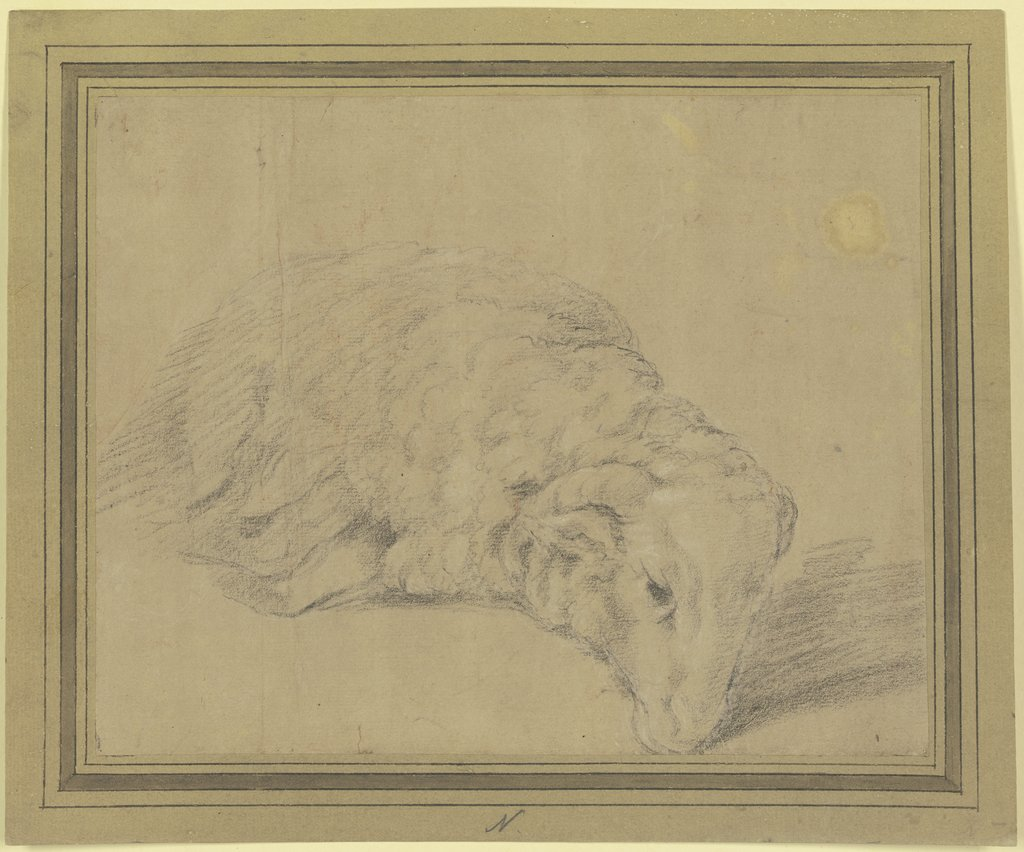 Lying sheep, Federico Barocci   ?