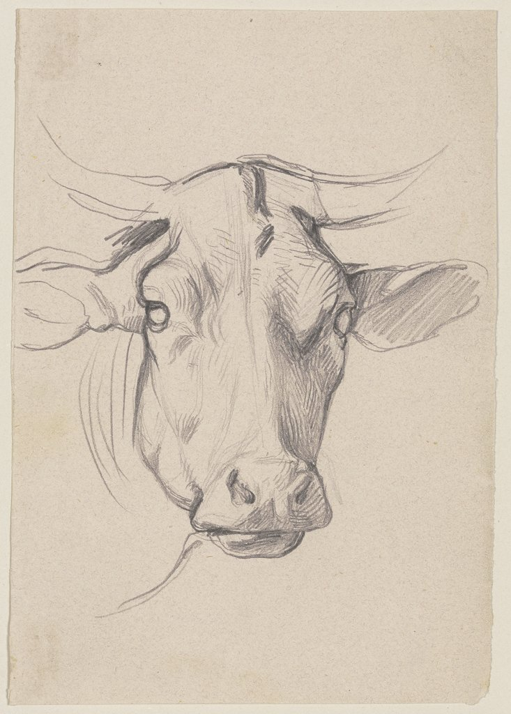 Head of a cow, Jakob Becker