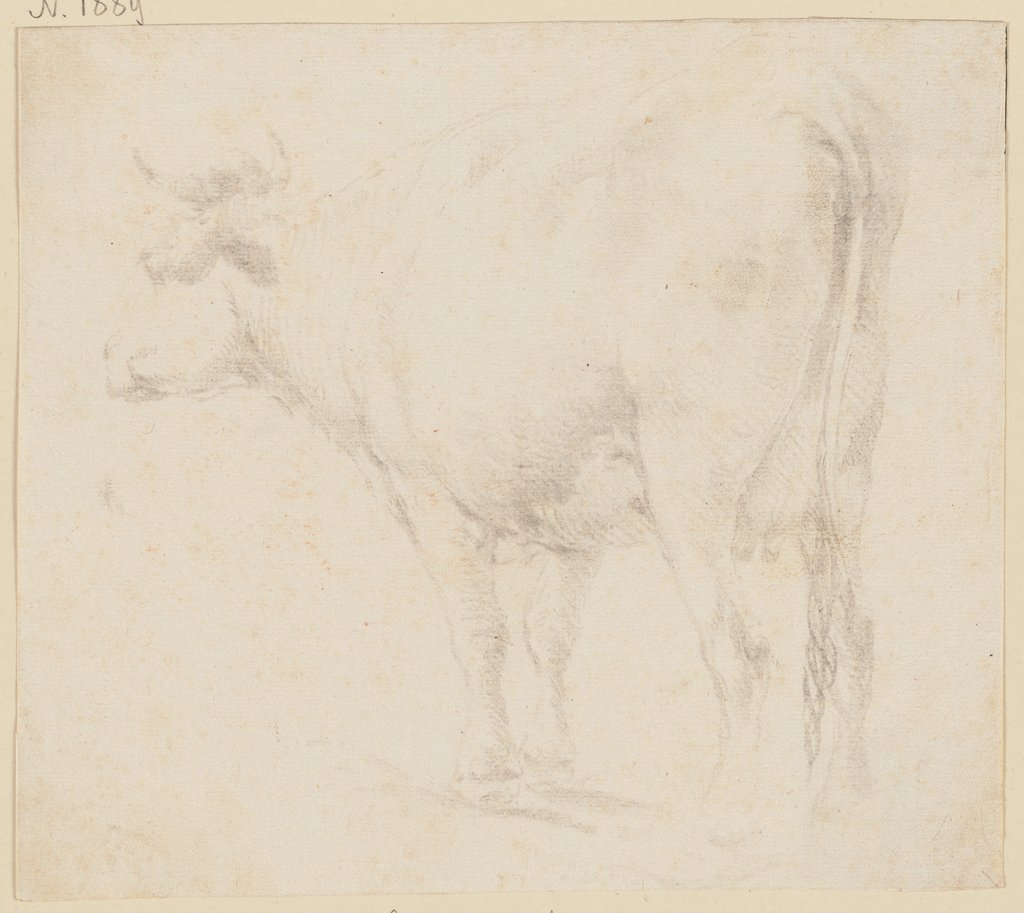 Standing cow to the left, Johann Heinrich Roos