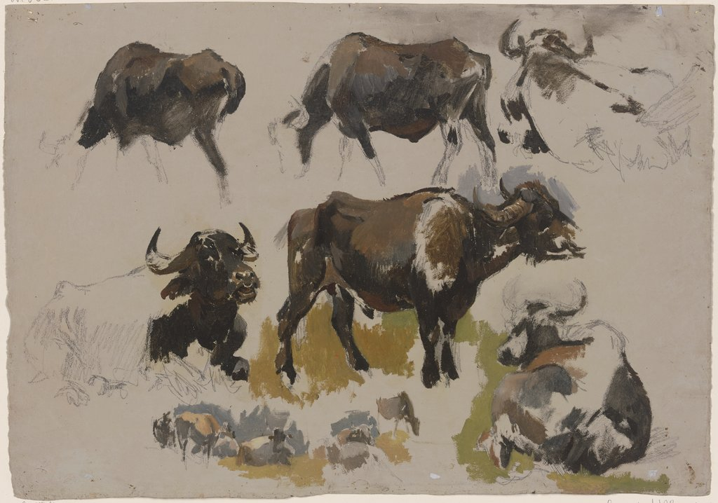 Buffalos and cattle, Johann Nepomuk Rauch