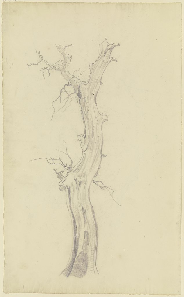 Leafless tree, August Lucas