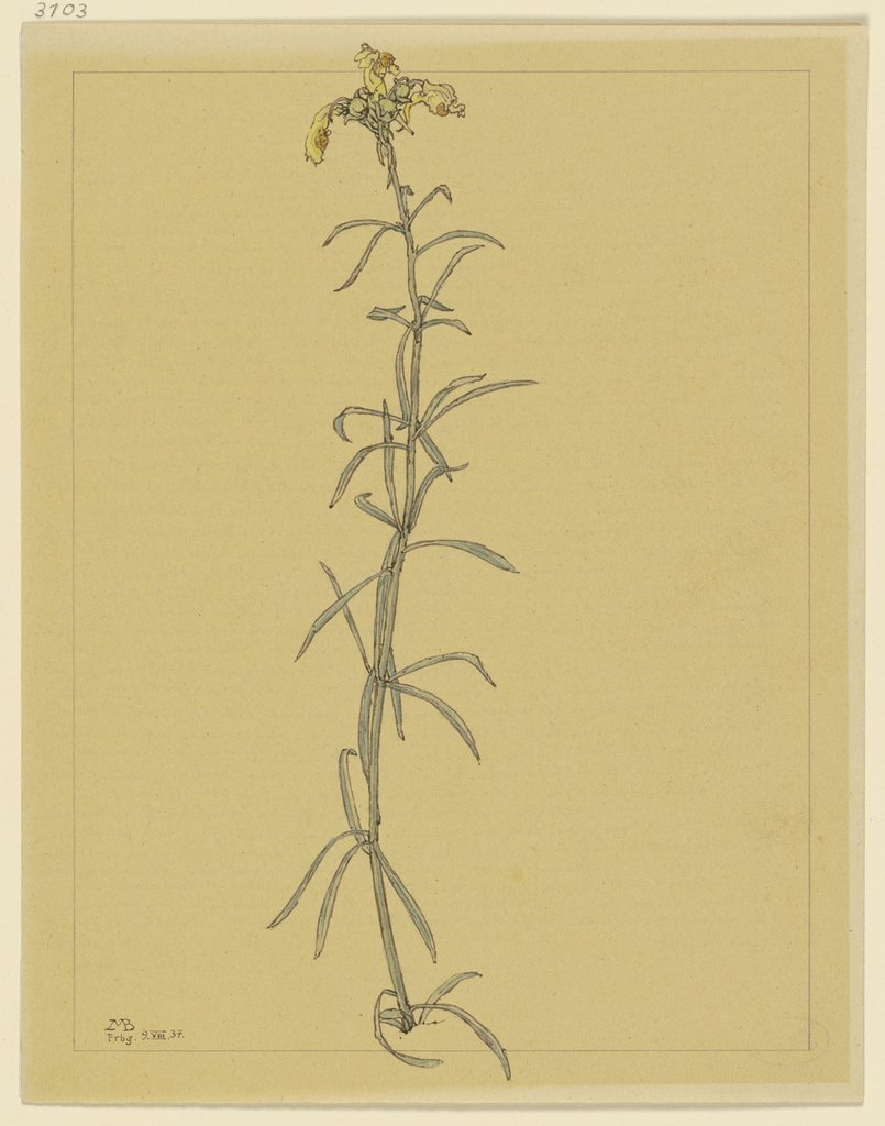 Snap dragon stem, Marcus Behmer
