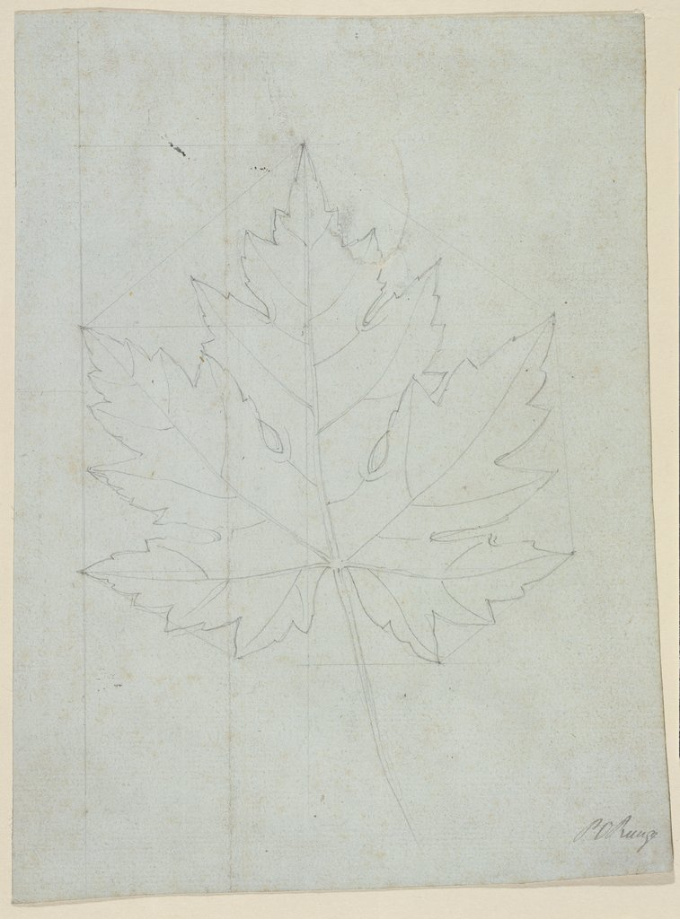 Maple leaf, Philipp Otto Runge