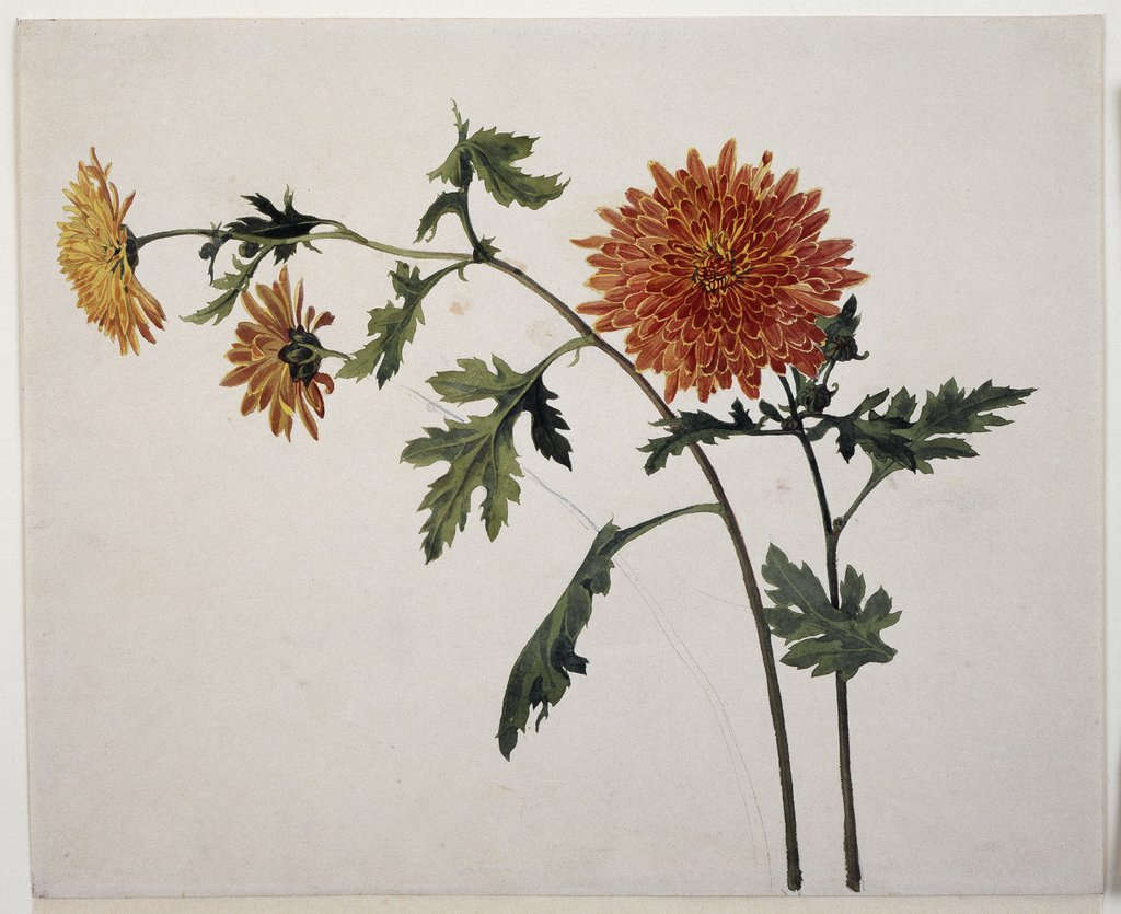 Chrysanthemen, Franz Horny