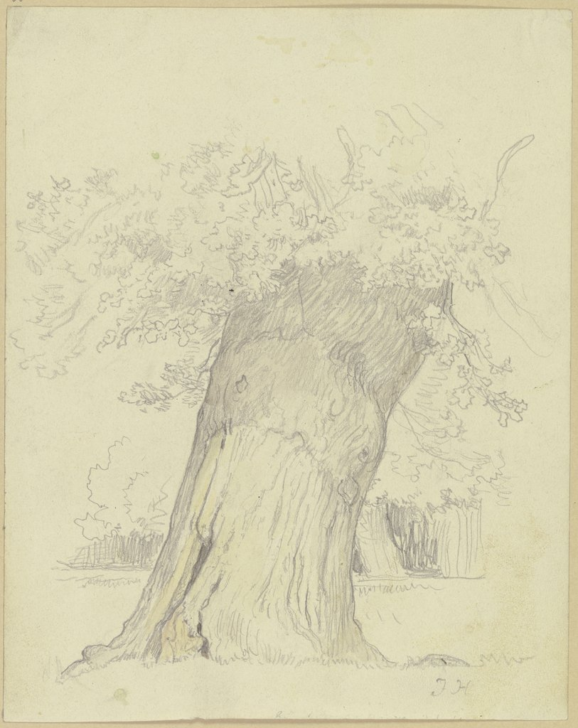 Tree, Julius Hamel